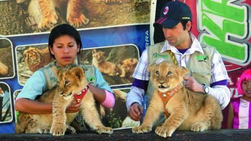 Leones Zoologico Huancayo