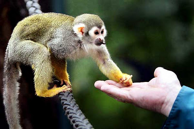 Mono del Zoologico de Huancayo